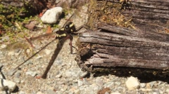 Big Dragonfly on a wooden plank Stock Footage