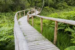 Wooden Footpath Detail Stock Photos