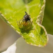 Green Cucumber spider Stock Photos