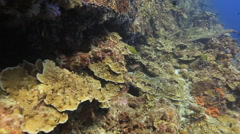 Coral reef wall amazing underwater Stock Footage