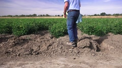 California tomato farmer, computer - stock footage