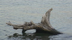 Stock Video Footage of Driftwood in the water