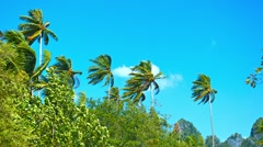 Tall Coconut Palms Bending in a Strong Tropical Wind Stock Footage
