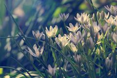elegant white garden flowers, tinted image - stock photo
