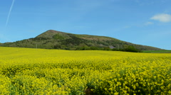 Rapeseed Field - stock footage