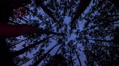 Astro Timelapse through trees. - stock footage