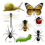 set of colorful insects - stock illustration