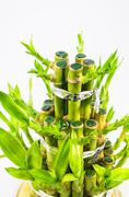 Bamboo and leaves Stock Photos
