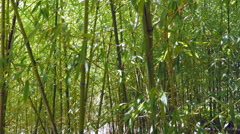 Young Bamboo Plants Growing In A Forest In China Stock Footage