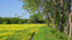 Beautiful daisy flower field and trees on a sunny day at spring Stock Footage