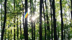 Sun beams come through fresh, lush, spring foliage in a forest - stock footage