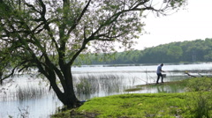 Alone tree on a beautiful lakeshore and reed bed Stock Footage