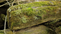 Old sawn timber Stock Footage