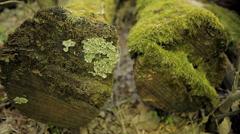 Felled logs Stock Footage