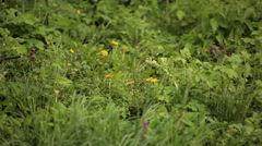 Grass in the rain Stock Footage