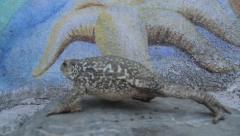 Toad walking Stock Footage