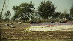 Stock Video Footage of Indian men unroll carpet fabric in field, long shot, shallow DOF