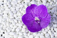stones and orchid - stock photo