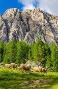 Flock of sheep in pasture foothills, Dolomites - stock photo
