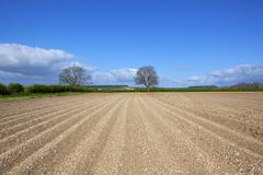 Springtime potato field Stock Photos
