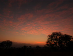 Sunrise African Savanna in 4K and HD Stock Footage