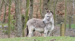donkey on a farm in april - stock footage