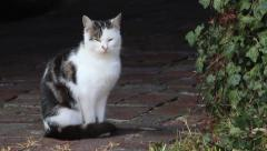 Young single cat on a farm Stock Footage