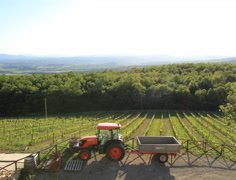 Tuscan Timelapse Tractor and Vineyards Italy in 4K and HD - stock footage