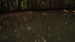 POV from a boat drifting through muddy waters of mangrove swamps. Camera Stock Footage