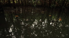 POV from the nose of a boat drifting through muddy waters of mangrove swamps. Stock Footage