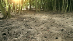 Wide-shot of red mangrove crabs emerging from their burrows in the sand at Stock Footage