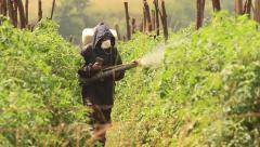 Female Farmer Fertilizing Crops in Africa with a pesticide Stock Footage