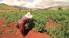Female Worker on Beautiful Farm in Africa.mov - stock footage