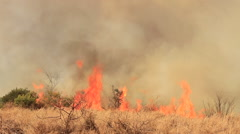 Wide-shot of ashes and smoke as a result of a large bush fire in a wilderness - stock footage