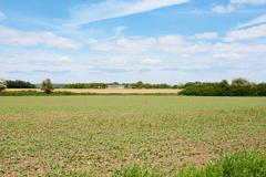 Farmland with agricultural buildings beyond Stock Photos