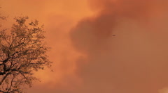 A bird flies past branches of a tree framed behind thick orange smoke of a bush Stock Footage