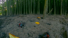 Two Red Mangrove crabs, camera slow zoom in to one crab grabbing a yellow leaf Stock Footage