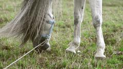 Andalusian stallion grazing Stock Footage