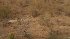 Impala running WS cam shaky NG (we film with permission inside National Parks, - stock footage