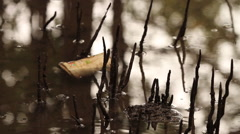 Mangrove Swamps Litter Stock Footage