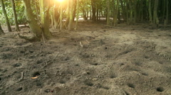 Stock Video Footage of Mangrove Swamps WS Crabs and Burrows at Sunset