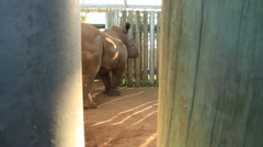 Rhino captive in a Boma (we film with permission inside National Parks, contact - stock footage