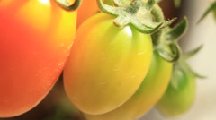 Stock Video Footage of Roma Tomatoes hanging on Vine