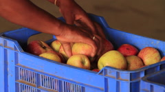 Sorting through Apples in a Crate SloMo - stock footage