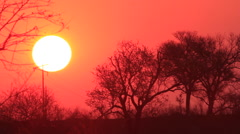 Sun setting behind Telephone Pole Stock Footage