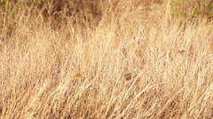 Driving past Grass in the Kruger National Park shot in HD Super Slow Motion - stock footage