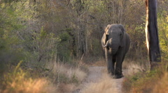 Elephant on a Dirt Road at Sunset in Africa shot in HD Super Slow Motion - stock footage