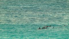 Pod of Dolphins Swimming In A Bay Stock Footage