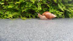 Stock Video Footage of slow motion, moving snail, snail's head turns to camera