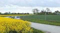 Road rapeseed oil field, traffic road 2 Stock Footage